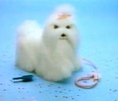 Trotti Trotta le chien robot par Hasbro